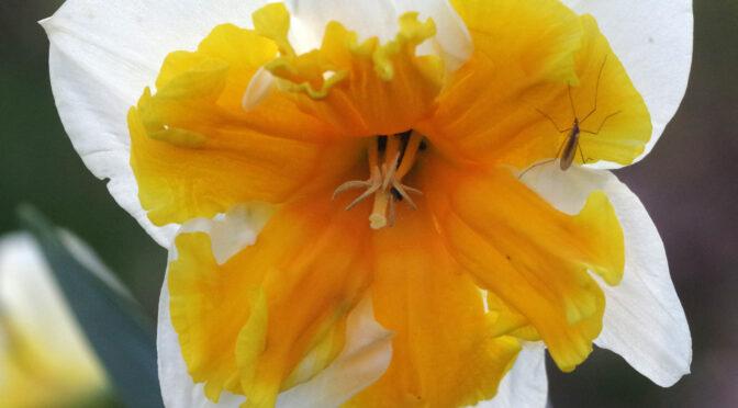 Blumengruß am Straßenrand